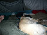 Often the tent was our den He'd poke his snout at the zipper entrance and let himself in or out