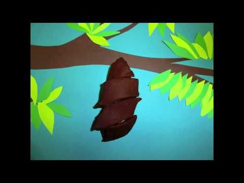 This is a life cycle of a butterfly movie made from play-doh and construction paper created by a 2nd grade class.