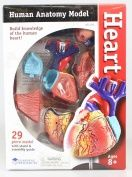 Learning Resources Anatomy Model Heart
