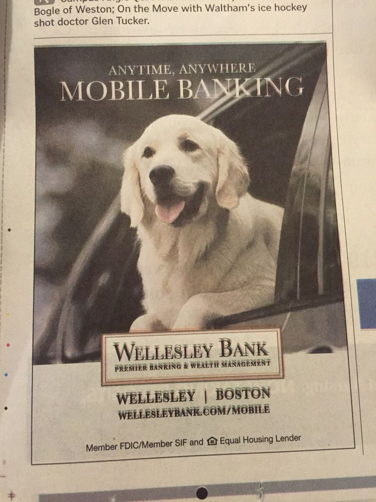Are they implying that this dog has a bank account?