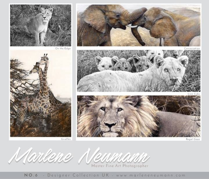 My UK Designer Boards No.6... Great ideas to create themes for your home or office space. THE WILDLIFE BOARD...A very special collection of my images. Please Share with friends you know are wanting Images on their walls...What you hang on your walls matters...make sure you have visuals that Inspire you and feed your spirit throughout the day. Visit my website www.marleneneumann.com ...Love Marlene