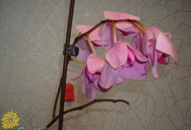 Полейте растения этим средством и они оживут через пару дней. Обсуждение на LiveInternet - Российский Сервис Онлайн-Дневников