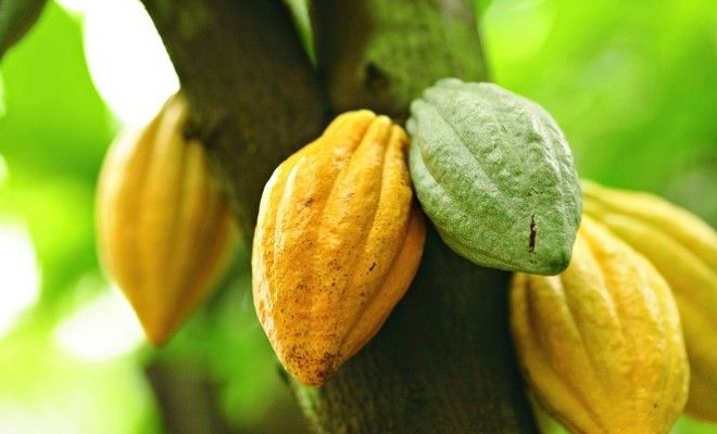 The GRAM Guide to Chocolate: From Bean to Bar | Gram Magazine