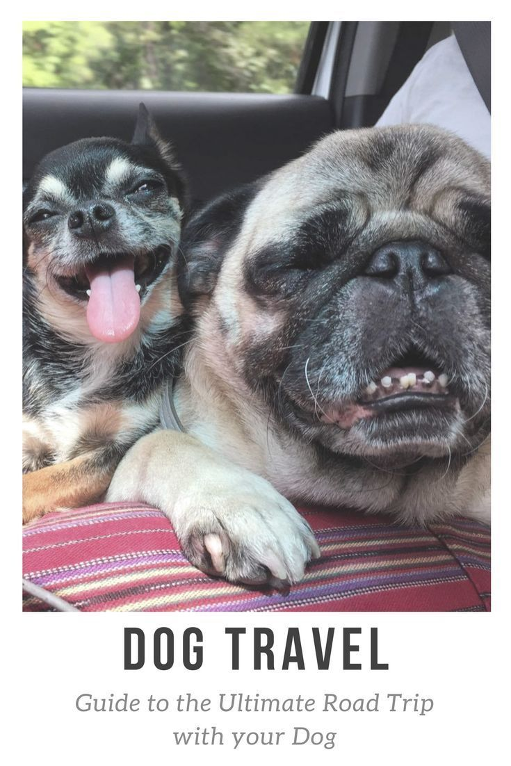 Guide To The Ultimate Road Trip With Your Dog Road Trip With Dog
