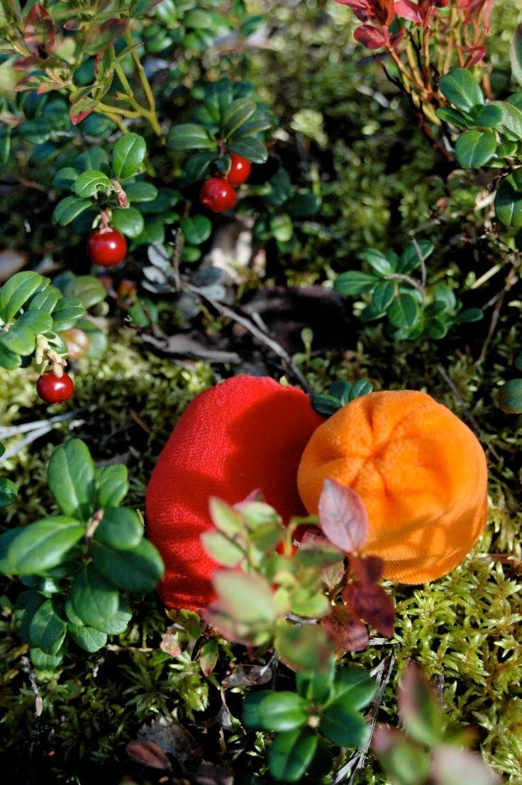 Småkompisar: Let´s go Lingonberry-picking!
