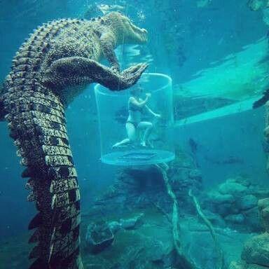 Resultado de imagen de cueva del cocodrilo australia