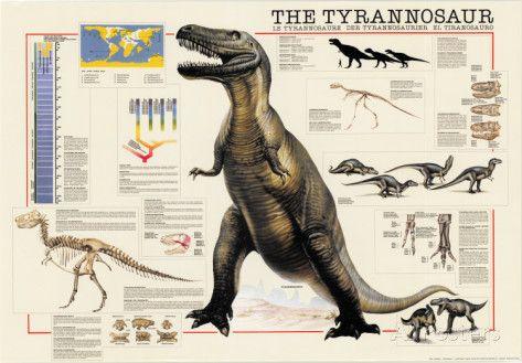 Dinosaurs Tyrannosaurus Poster