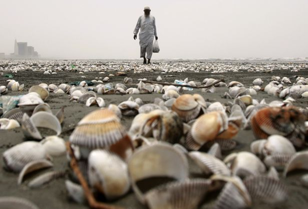 A man collects shells on Clifton Beach in Karachi, Pakistan.