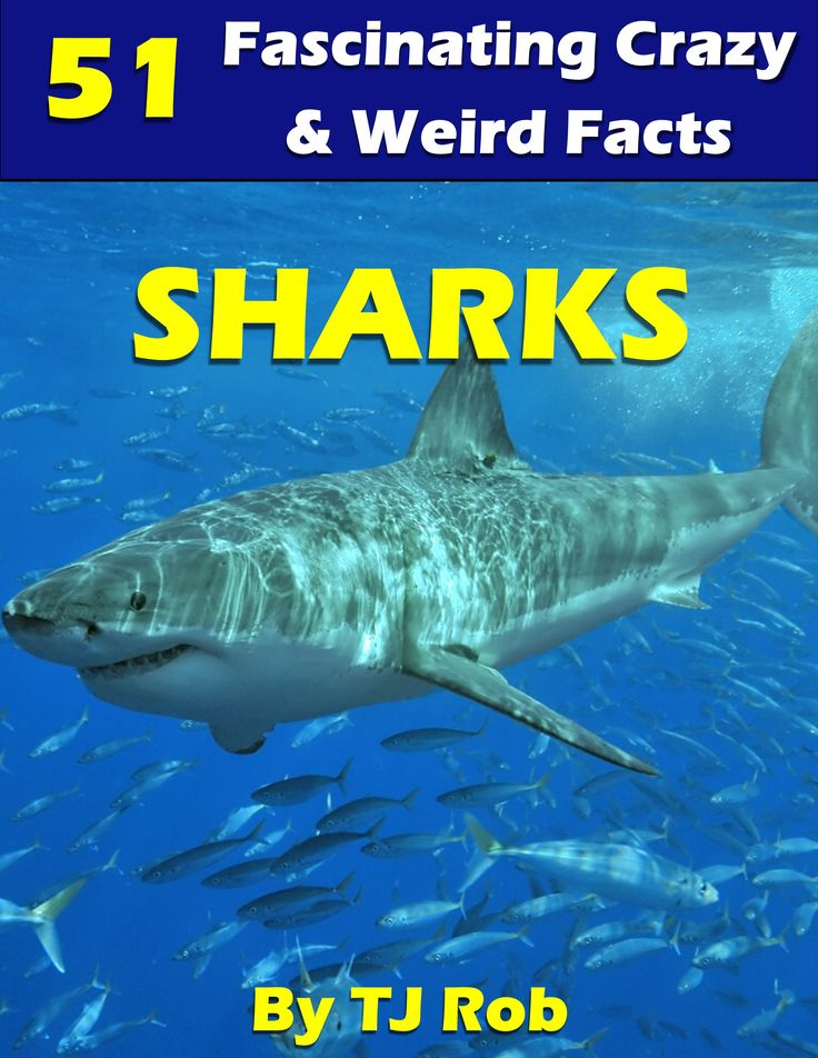 Kids love Sharks - here's a bunch of crazy new facts about Sharks!  #sharks #sharkfacts #kidsbooks