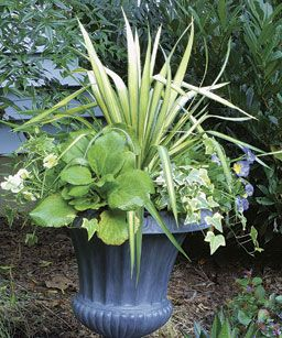 10 Plants For Year Round Containers   Fine Gardening Article