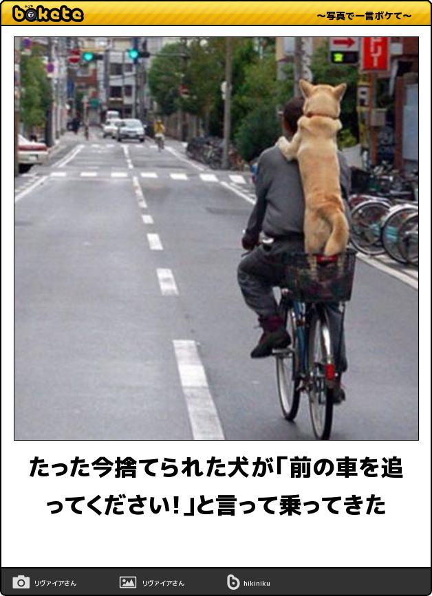 たった今捨てられた犬が「前の車を追ってください!」と言って乗ってきた