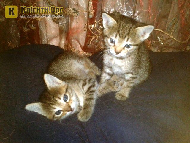 Очаровательные котята ждут Ваших звонков! #кот #котята #продам+котят