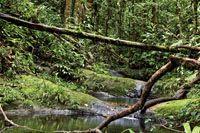 La inmensa disponibilidad de agua permite el desarrollo de una exuberante vegetación en las selvas de las tierras bajas del Chocó Biogeográf...