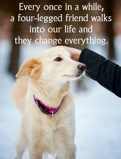 Every once in a while, a four-legged friend walks into our life and they change everything. ~ for pet lovers