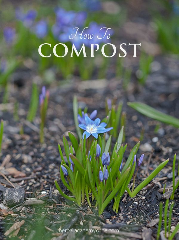 How to compost, easy guide with recommendations for apartments