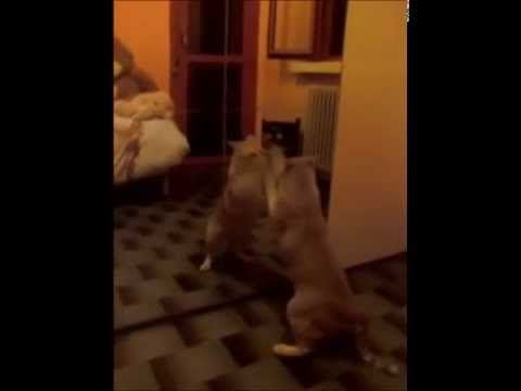 CAT vs MIRROR! HAHAHAHAH!!! - YouTube
