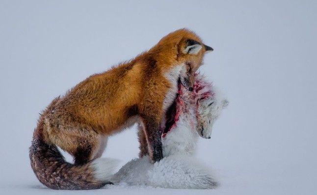 Las 10 fotos ganadoras del concurso 'Wildlife Photographer'
