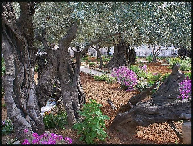 102 Best Images About Garden Of Gethsemane On Pinterest Gardens Mary Magdalene And Christ