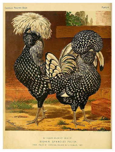 005--The illustrated book of poultry. With practical sched… | Flickr
