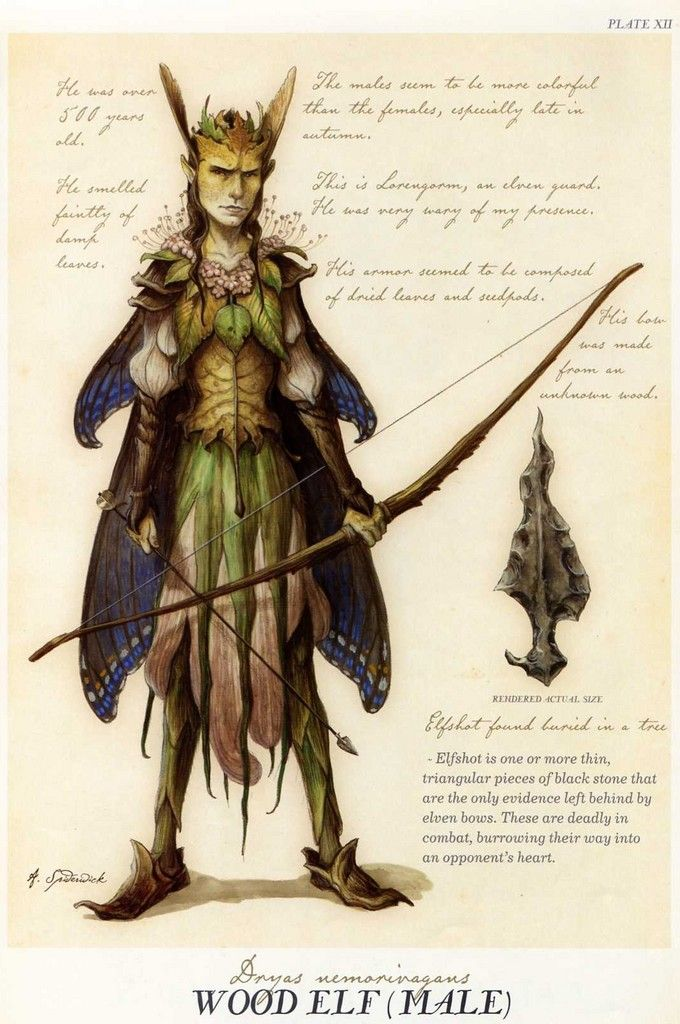 """Wood Elf {Male}"" from ""Arthur Spiderwick's Field Guide to the Fantastical World Around You"" illustration by Tony DiTerlizzi."