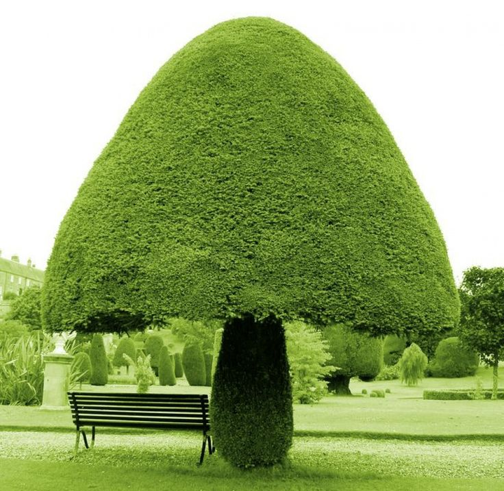 Árvore em forma de cogumelo