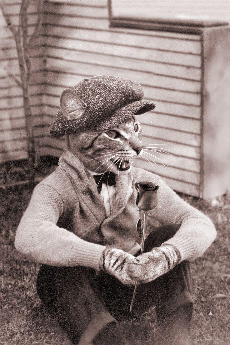 Vintage anthropomorphic photo cat collage