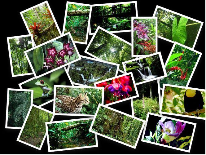 amazon rainforest plants collage. rainforest flora and fauna imagenes buscar con google amazon plants collage a