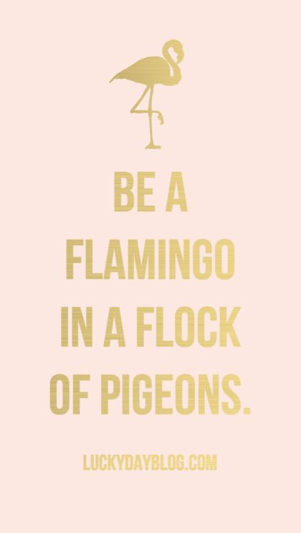"""Be a flamingo in a flock of pigeons."" #WWWQuotesToLiveBy #Quotes"