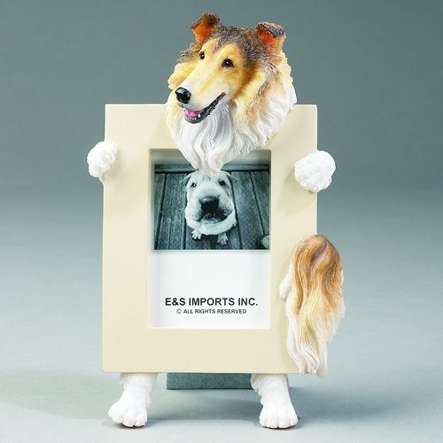 Collie Picture Frame Single