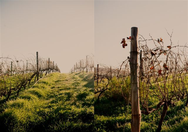 http://www.perfecthideaways.co.za/Details/Badenhorst-Farm-Cottage?Itemid=