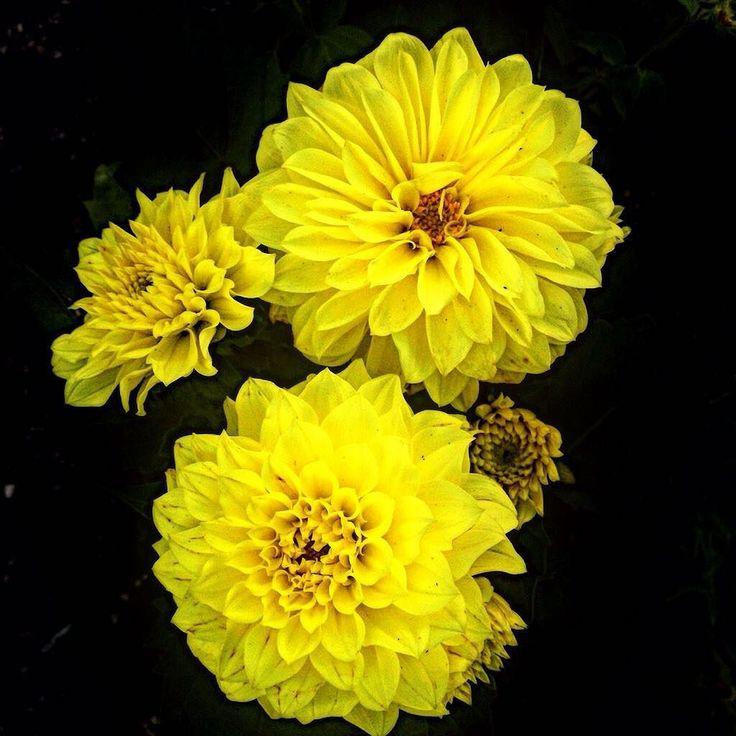 Nel giardino trovi sempre un tesoro  #inmygarden#meow#yellow#flowers#perfume#lovely#fenomeni#naturali#importanti#rimini#in#love#likeforfollow#likeforlike by giudittamazzoli