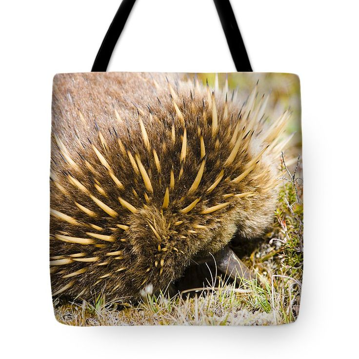 Tasmanian Tote Bag featuring the photograph Australian Echidna Burrowing Up Ants Nest by Jorgo Photography - Wall Art Gallery