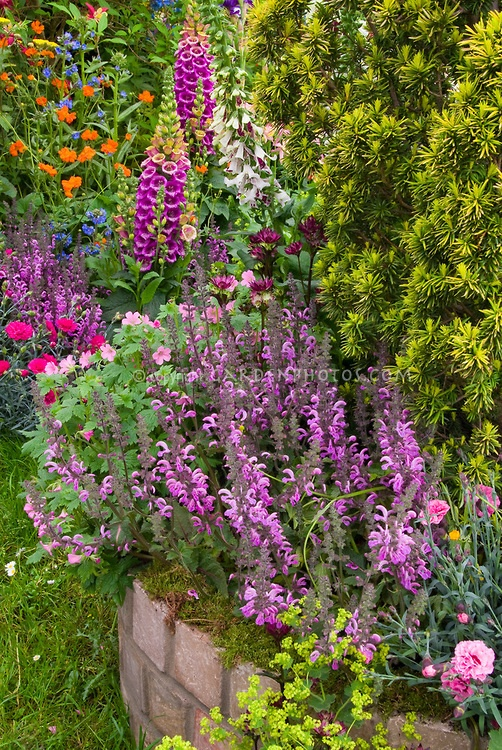 17 best images about garden flower and plant favorites - Plants with blue flowers a splash of colors in the garden ...
