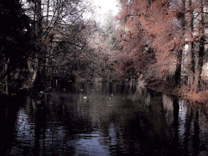 Buongiorno #Milano Siamo ai giardini Montanelli Foto di Claudio Sabatini #milanodavedere Milano da Vedere