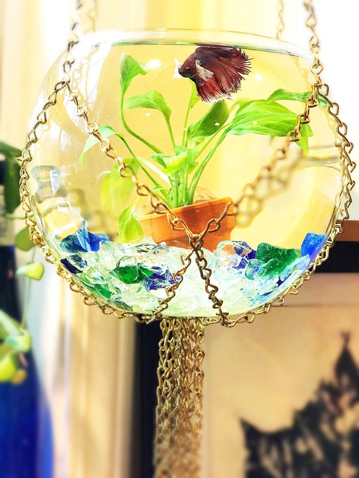 $78.00 on Etsy. Handmade macrame fish bowl hanger, macrame, mid century decor, mid century modern, mid century modern decor, air plants, terrarium, fish bowl, beta fish bowl, gold fish bowl, boho decor, bohemian decor, hippie decor, sea glass, plant terrarium, gold decor, gifts for girls, pet supplies, cool fish bowl, hanging plants, hanging fish bowl, macrame chain hanger, macrame plant hanger, air plant, unique fish bowl, fish bowl hanging, beach house decor, iwana on etsy, iwana1, iwana 1