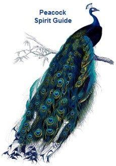Animal Spirit Guide - Peacock