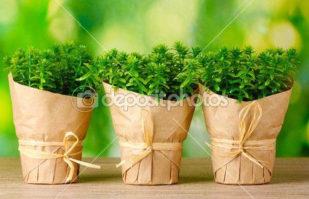 Чабреца травы растения в горшках с декором красивую бумагу на зеленом фоне на деревянный стол — стоковое изображение #10992603