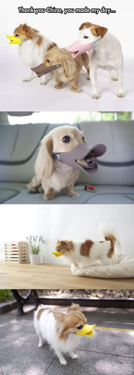 Another day, another strange gadget from China. This time, it is a duck mask for dogs.
