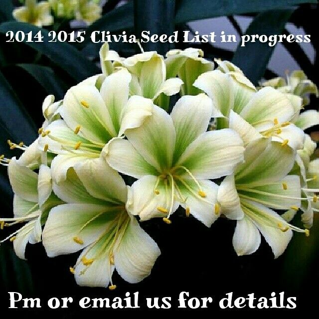 2014-2015 Clivia Seed List almost ready.. Contact us for details
