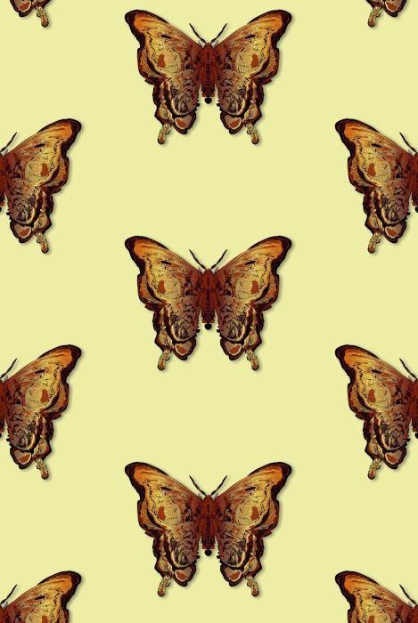 Butterflies wallpaper by Timorous Beasties. I adore it