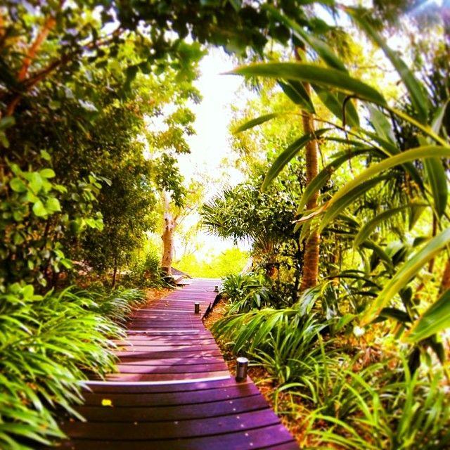 Wander through Chef Waddels luscious herb and veggie garden at #qualia