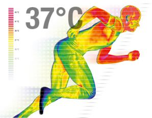 The amount of heat produced by the human body in 30 minutes is enough to boil a gallon of water.