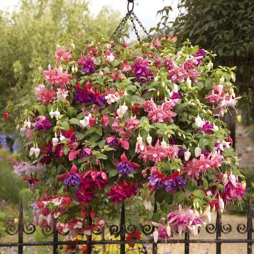Best flowers for autumn hanging baskets : Best images about cool hanging baskets on