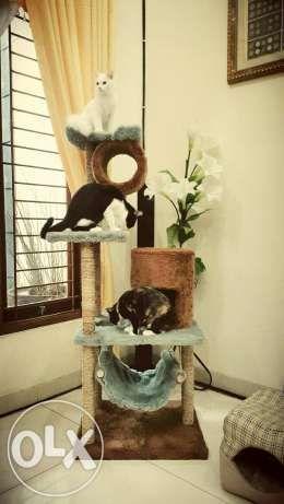 Mainan kucing/rumah kucing/cat scratcher/cat condo