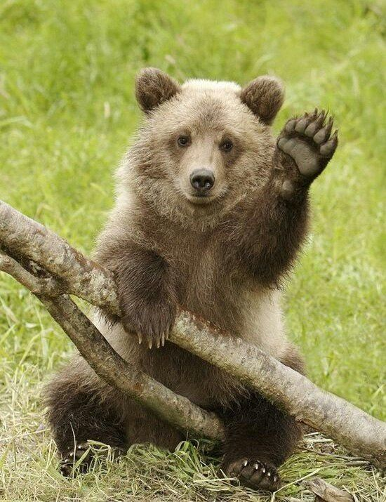 .Привет, медведь)))