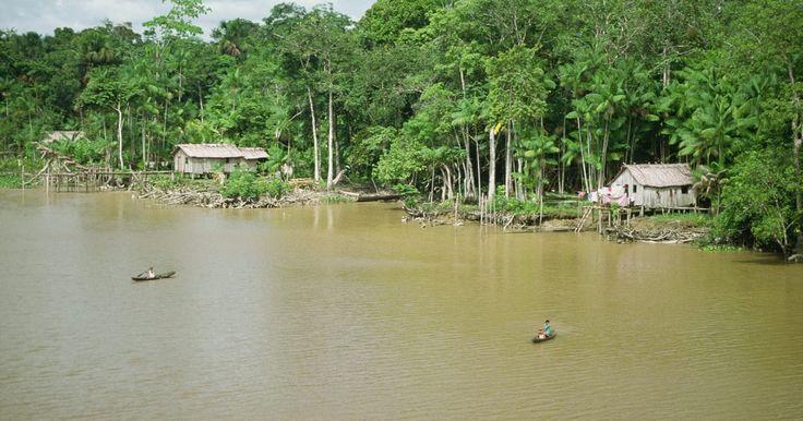 ¿Cuáles son los recursos de la selva Amazónica?. La selva del Amazonas es una de las zonas con recursos más ricos y variados del planeta. Por su clima, que permite que la flora y la fauna crezcan durante todo el año, se ha desarrollado por miles de año como un cielo para los árboles, plantas medicinales y una gran variedad de insectos, aves y otros animales. Esta selva es muy susceptible a la ...