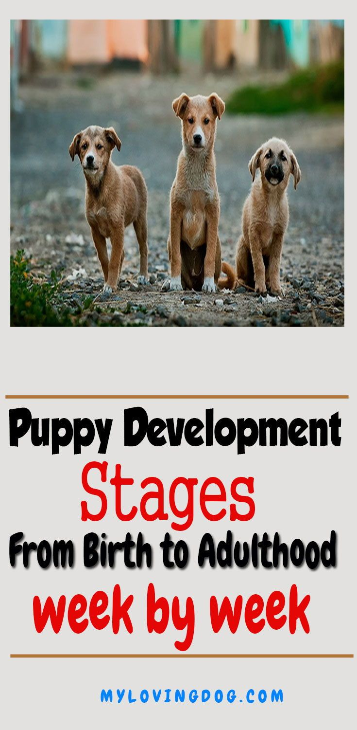 Puppy Development Stages Week by Week from Birth to