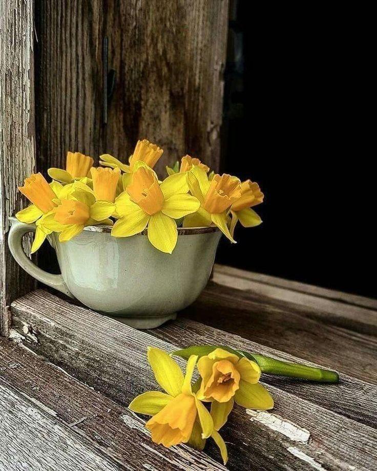 Утро желтые картинки