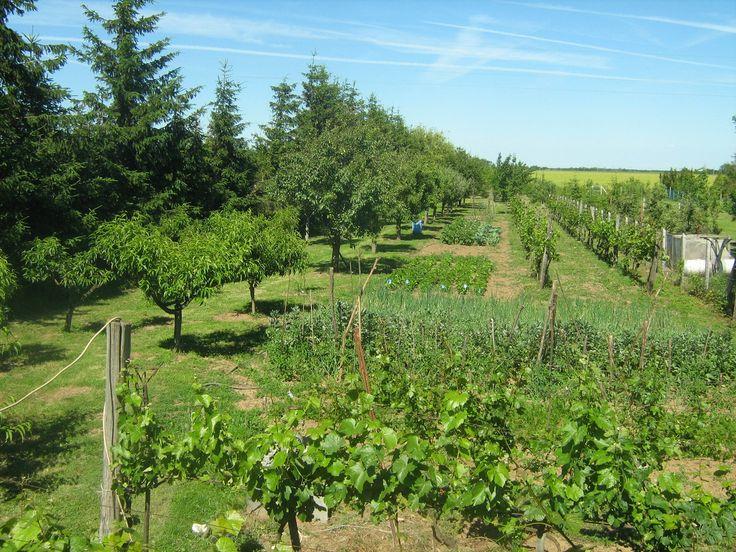 Szijj Ferenc honlapja - Kertészeti praktikáim