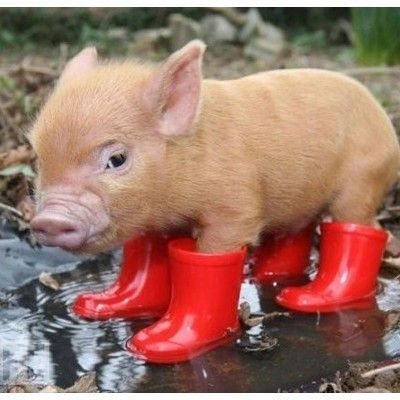 if only..I owned a piglet and he wore red booties.